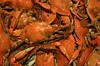 Cooked chesapeake bay blue crabs. They turn orange when they are cooked. They are delicious summer food.