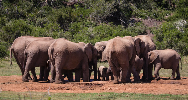 herd of elephants at a small watering hole