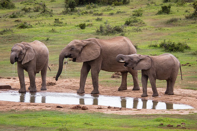 elephants enjoying  the water hole
