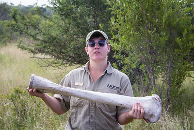 Craig, our ranger holding up an elephant thigh bone
