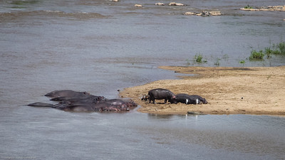 sighting hippos on drive to Lukimbi