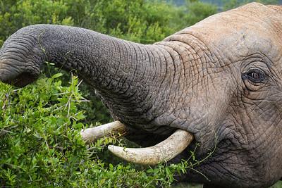 elephant: I see you!