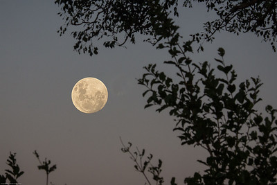 Moon rising: see the rabbit in the moon?