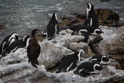Coromant among the Penguins