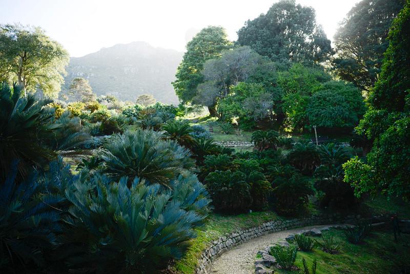 Kirstenbosch National Botanical Garden.