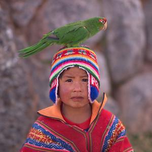 Parrot on boys head