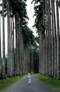 AVENUE OF THE ROYAL PALMS, PERADENIYA - 1975