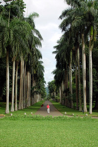 AVENUE OF THE ROYAL PALMS, PERADENIYA - 2006