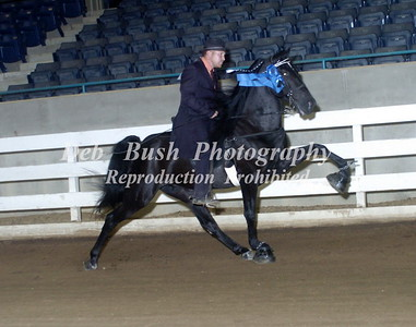CLASS 5  TWO YR OLD OPEN STALLIONS