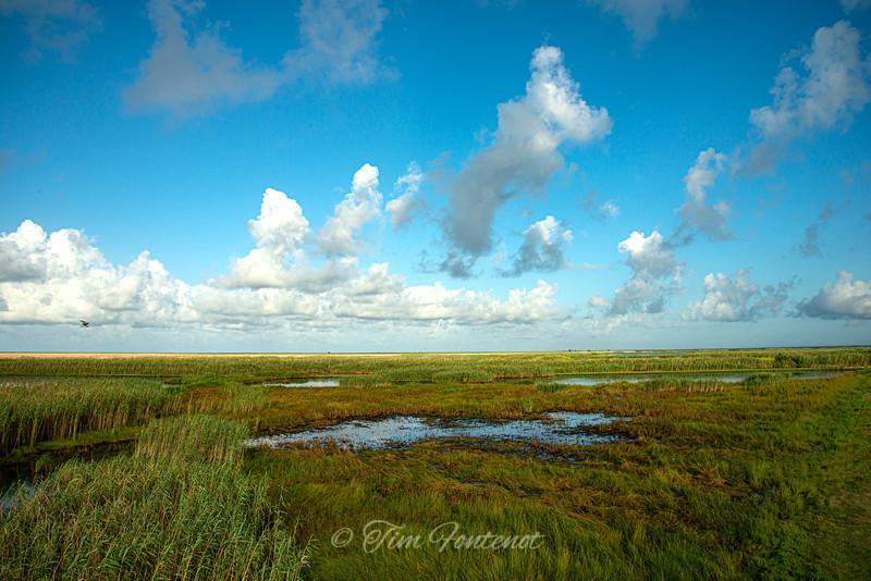 Marsh is Cameron Parish Louisiana