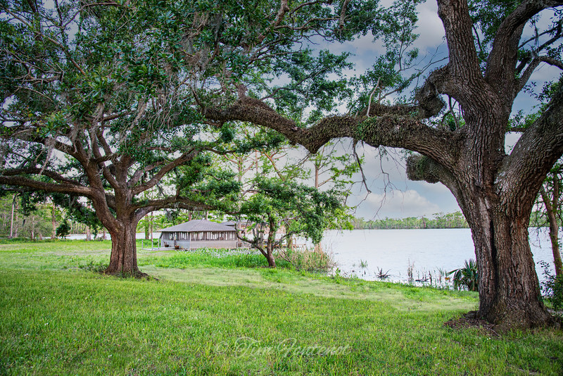 LIVE OAKS ON THE RIVER