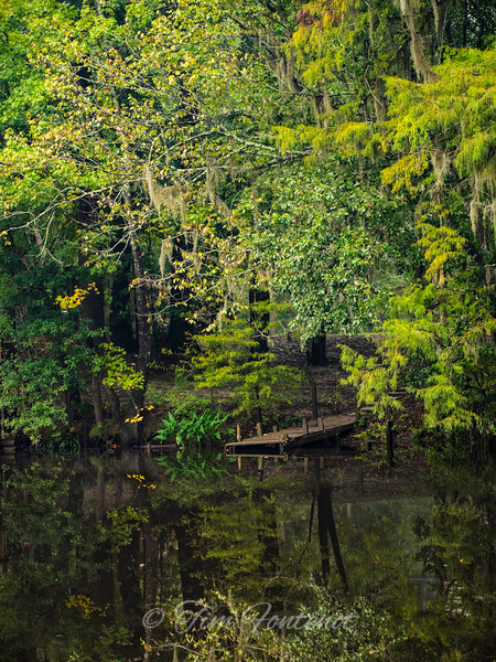 Bayou Life In Harmony with Nature