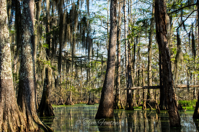 Lake Martin's Swamp