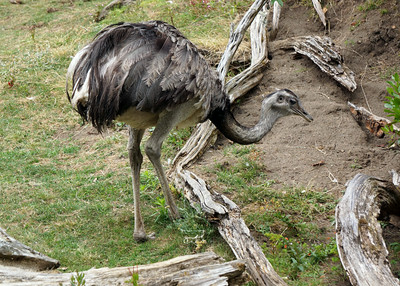 GREATER RHEA - LAS PAMPAS,  ARGENTINA
