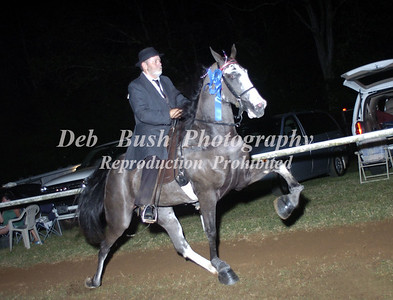 CLASS 31  FOUR YR OLD OPEN CANTER