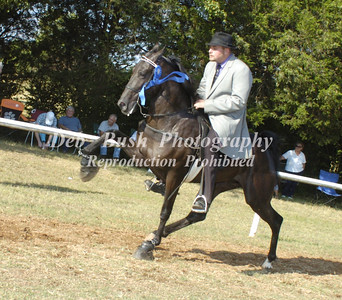 CLASS 5 TWO YR OLD STALLIONS OPEN