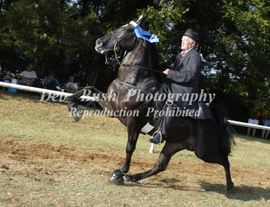 CLASS 9  SCWHA MEMBERS ONLY AMATEUR SPECIALTY