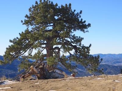 Lonely summit treet