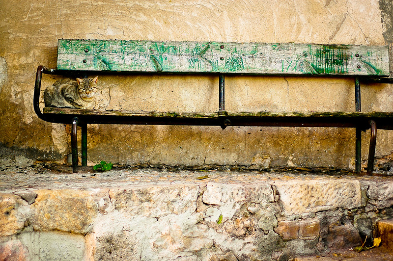 Kitty on a Bench<br /> Cuenca