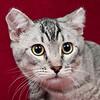 Dr Meow