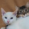 Violetta and Desmond