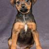 Hound Puppy 2