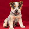 Puppy 3 Male