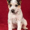 Puppy 1 Male