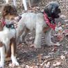 BAXTER (4 months) & KOBE (baxter housemate, 1yr)