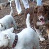 BAXTER (pup), isabell sambucca, Zim