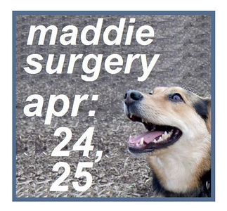 maddie hurt 2