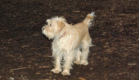 ANDY (cairn)