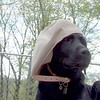 BARBIE (black lab, guide pup), Marty Hat