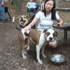 AVERY (pitbull), Candice, Maddie