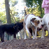 AVERY & ZOE (yellow lab pup)