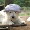 Sambucca hat 4