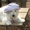 Sambucca hat 7