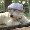 Sambucca hat 3