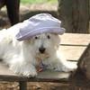 Sambucca hat 8