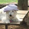 Sambucca hat 9