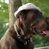 HARLEY (blue hat) 7