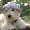 Sambucca hat 2