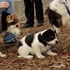 MICKIE (blue tick coonhound, 8 wks.), SAMI, MARLEY