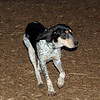 RUBY (blue tick coonhound) months.