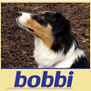 BOBBI (cover)