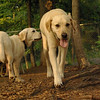 Butch, Roxy (pup)