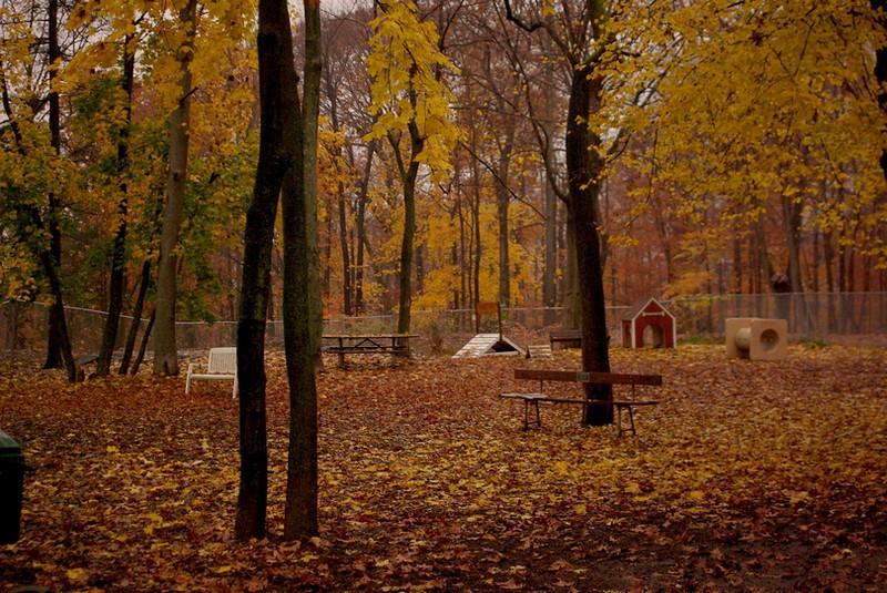 Ossining Dog Park