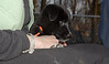 Bruiser (rescued puppy)_00007