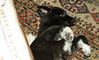 Bruiser (rescued puppy)_00001