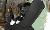 Bruiser (rescued puppy)_00005